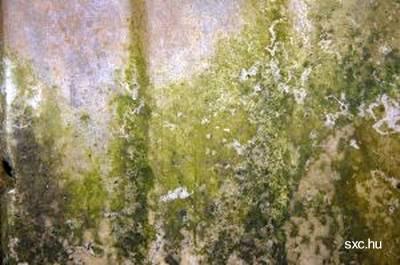 Arquitectura de casas remediar el moho que se desarrolla - Moho en las paredes ...