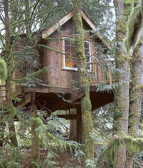 Casa cabaña rústica sobre árbol soportada en troncos