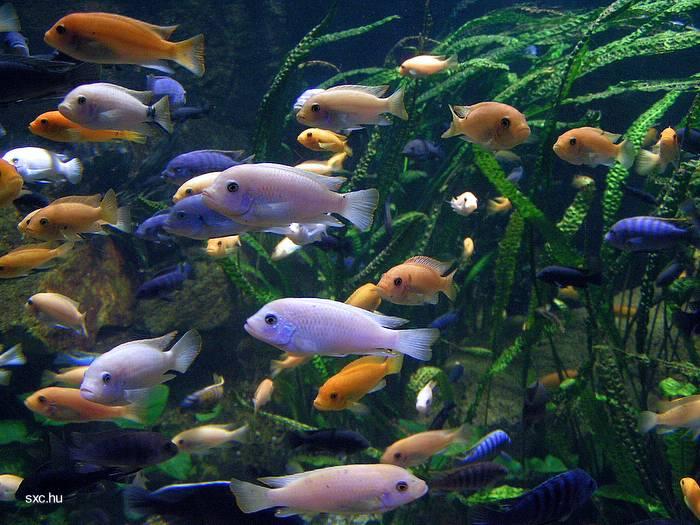 ~ Zoetwater Aquarium Welke Vissen Bij Elkaar