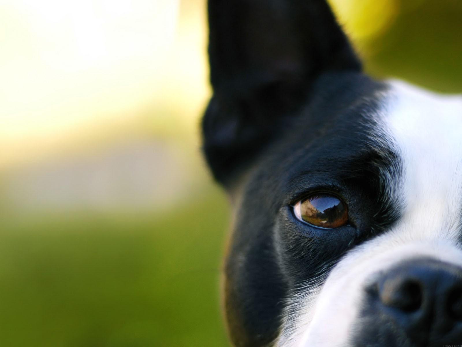 http://4.bp.blogspot.com/_nEmB3Z5F5EM/S62UDDrUQjI/AAAAAAAAIUw/YxnN7N1uliY/s1600/Dog_eye_Computer_Wallpaper.jpg