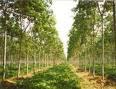 Lowongan Kerja di Perusahaan Perkebunan Kalimantan Selatan
