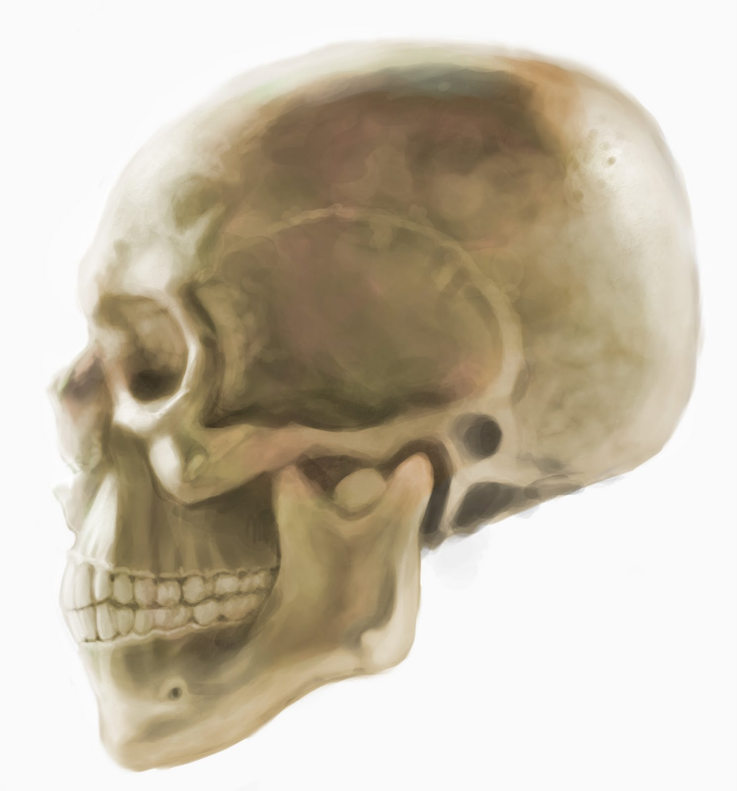 Tony Neto Sketchbook Cranio%2Bcor