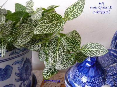 My household capers gardening not so easy care indoor plants fittonia verschaffeltii or - Easy maintenance indoor plants ...