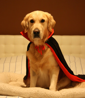 yes today is halloween and this can only mean one thing missus will be dressing me up again