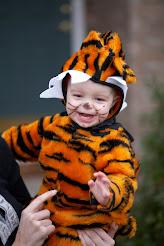 avery tiger