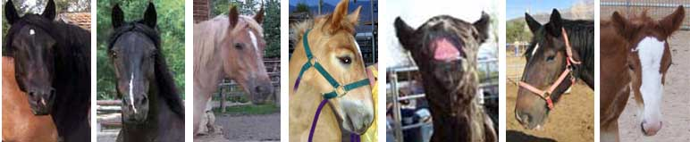 MHR PMU horses