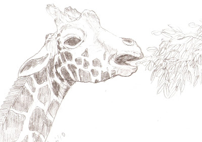 Line Drawing Giraffe : Colorations: february 2010