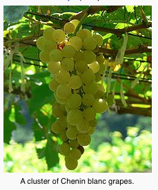 Chennin Blanc