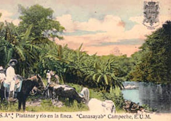 PLATANAR Y RIO EN LA FINCA
