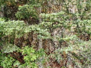 tree bark blended with pine branches