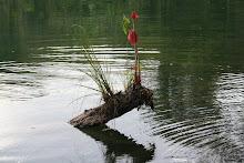 Orquídea en Casa de Agua