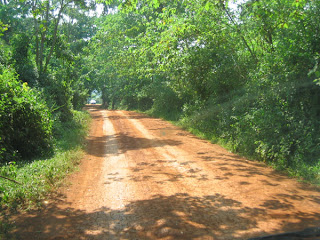 Shaded road on the drive to the Bujagali Falls