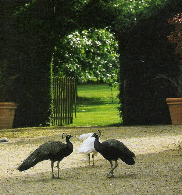 Côté Ouest, black and white peacocks, French garden, edited by lb for linenandlavender.net