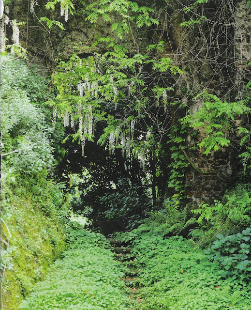 "wisteria, garden design by Stuart Barfoot ""Torrecchia"" estate, image via Côté Maisons as seen on linenandlavender.net, http://www.linenandlavender.net/2010/09/another-inspiring-image.html"
