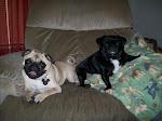 Pugsley & Lola Wolfe
