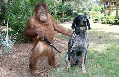 köpek ve maymun