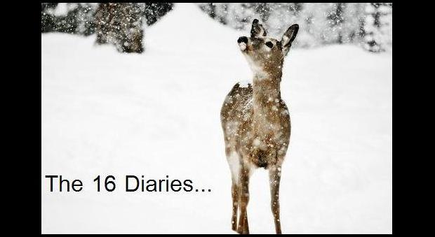 The 16 Diaries...