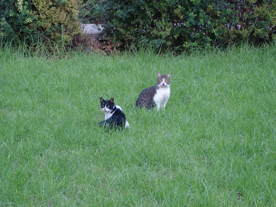 Kitties in the grass