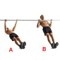 Inverted Row  reverse push-ups Inverted Row Muscles
