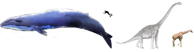 The Nature In Us: Blue Whales Bigger Than Dinosaurs