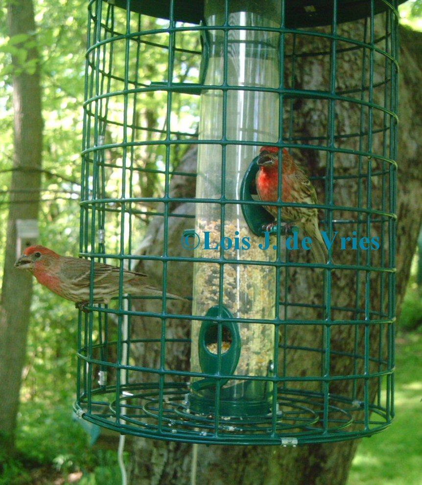 Squirrel Proof Bird Feeder Idea