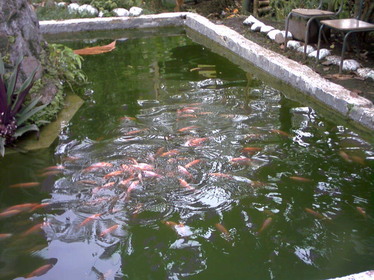 Piscicultura for Elaboracion de estanques para piscicultura