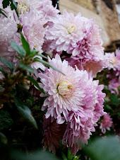 flores en los Arces..
