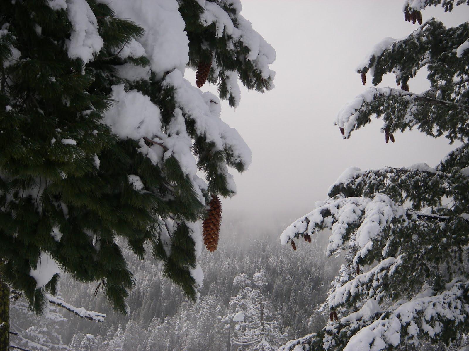 [snow+on+Morgan+Summit+008.JPG]