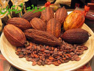 شجرة الكاكاوبالصور Cocoa%2520beans