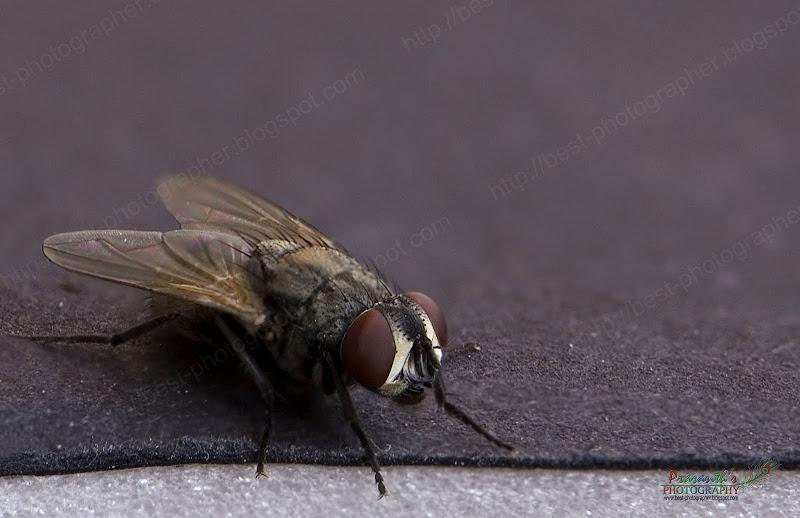 house fly 1
