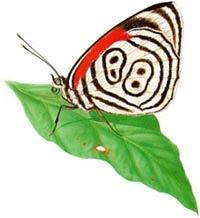 Aprenda mais sobre as lindas borboletas!