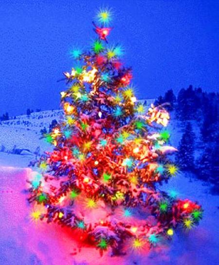 0comentarios - Arbol de navidad fotos ...