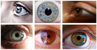 Cuál será su color de ojos?