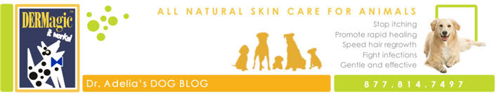 DERMagic Skin Care for Animals Blog