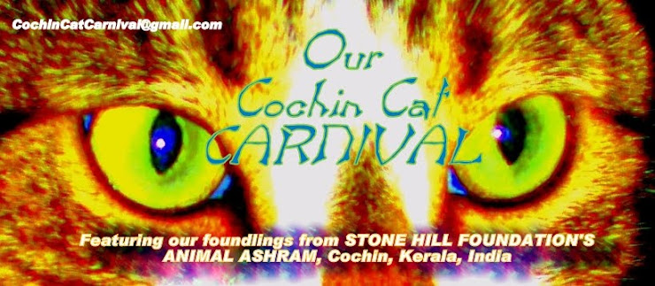 Our Cochin Cat Carnival