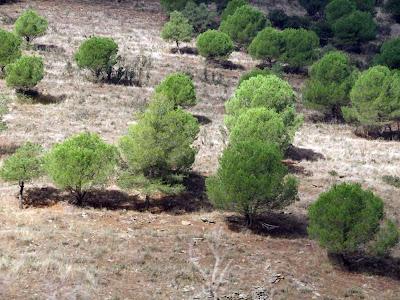 Árboles de Despeñaperros