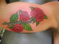 Rosa a virilia