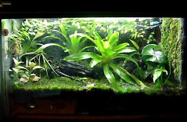 Crece y crece verde terrarios - Plantas para terrarios ...