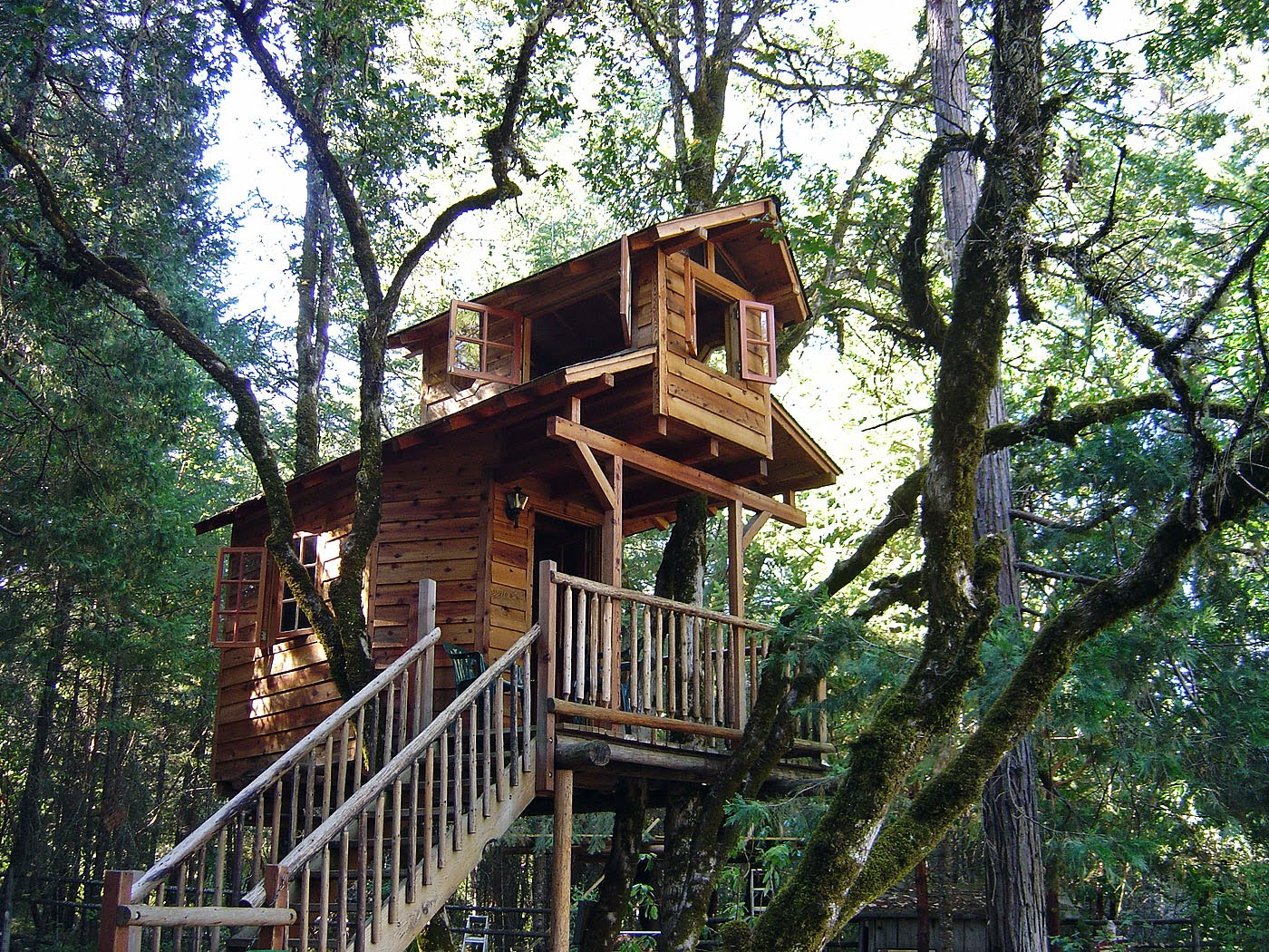 For a bear tree houses Build your home
