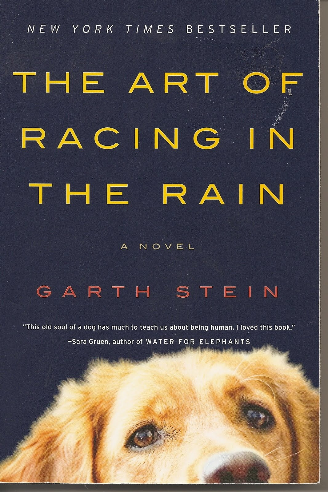 the art of racing in the rain book report Book: the art of racing in the rain  you can purchase the art of racing in the rain online at hugo bookstores  report abuse simple theme.