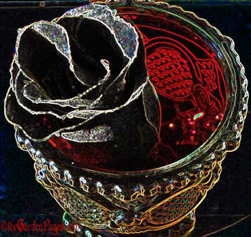 The Allure of Black Roses for