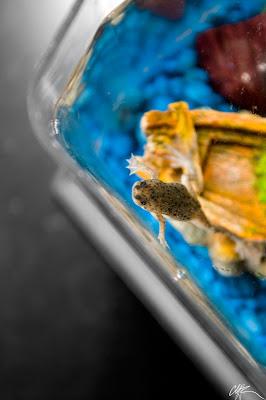 Frog O Sphere Brookstone Brookstone Frog O Sphe...