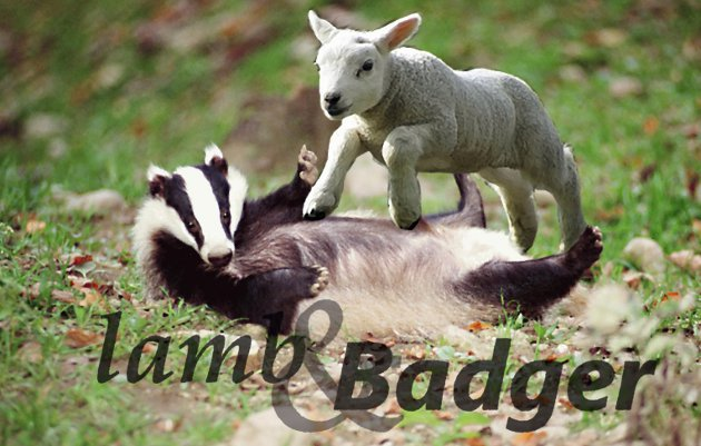 lamb & badger