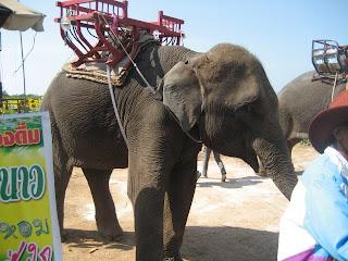 Ini Gajah. Bukan, bukan yang pake baju ma tudung! Gajahnya entu nyang ...