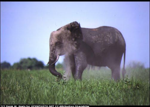 [elephant.htm]