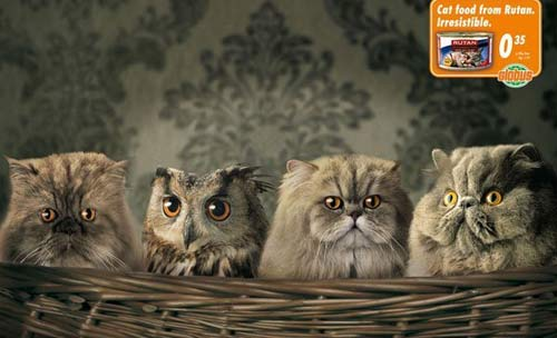 http://4.bp.blogspot.com/_nlck5AjueuA/TANyoYyJxTI/AAAAAAAAAA0/s_vmHr9AnL8/s1600/FUNNY+OWL.jpg