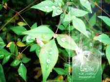 KEBESARAN ALLAH-SURAH AL-MUKMINUN 1-11