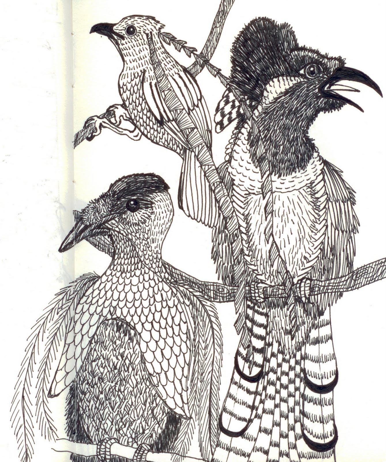 Emma Cowley Illustration: Half and Half Competition