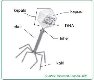 batang), misalnya pada virus mozaik, ada yang berbentuk polihedral