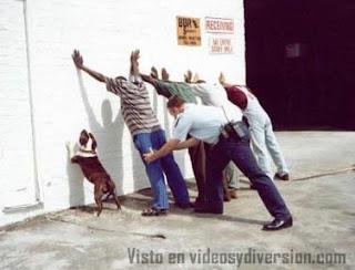 Perro contra la pared